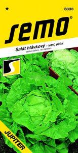 salat-hlavkovy-jupiter