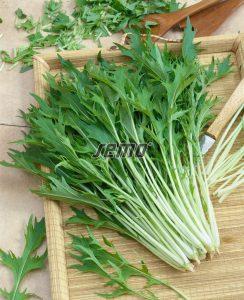 0125-semo-zelenina-mizuna2