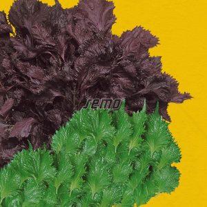 0135-semo-zelenina-perila-krovita-perila2