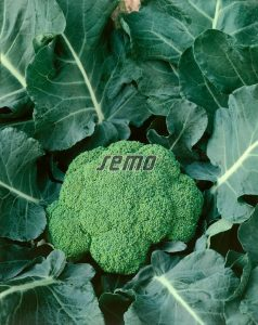 0212-semo-zelenina-brokolice-fellow2-1-2