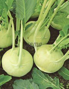 0387-semo-zelenina-kedluben-korist-2