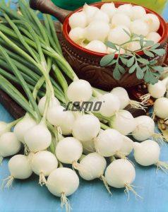 0511-semo-zelenina-cibule-kuchynska-pompei2