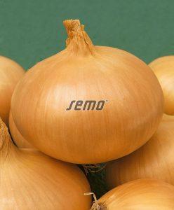 0571-semo-zelenina-cibule-kuchynska-hiberna2
