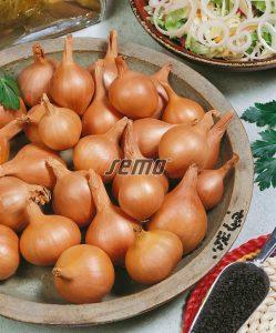 0581-semo-zelenina-cibule-salotka-ambition2
