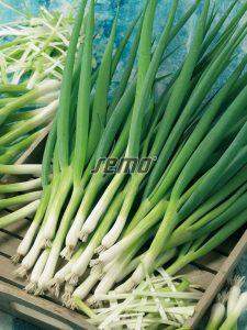 0590-semo-zelenina-cibule-zimni-kaj2