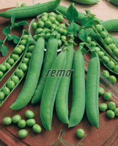 1010-semo-zelenina-hrach-sety-drenovy-gloriosa2