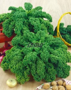 1302-semo-zelenina-kaderavek-halbhoher-gruner-krauser2
