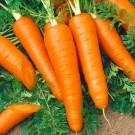 2245-semo-zelenina-mrkev-obecna-karola2-135x135-1
