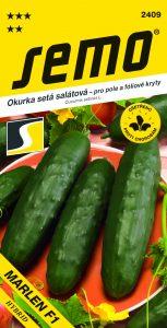 2409_Okurka-salátová-MARLEN-F1-2
