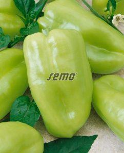 2508-semo-zelenina-paprika-rocni-nova2