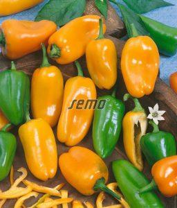 2521-semo-zelenina-paprika-rocni-hamik2