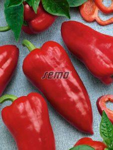 2526-semo-zelenina-paprika-rocni-raduza2