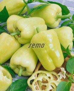 2537-semo-zelenina-paprika-rocná-kvadry2