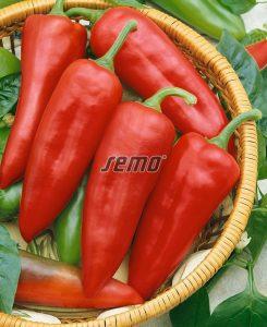 2538-semo-zelenina-paprika-rocni-lungy2