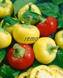 2552-semo-zelenina-paprika-rocni-almapaprika2
