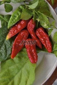 2557-semo-zelenina-paprika-rocni-naga-morich2