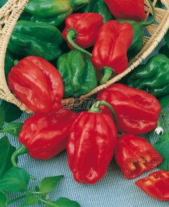 2559-semo-zelenina-paprika-rocni-habanero-red2