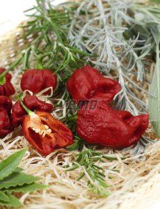 2570-semo-zelenina-paprika-rocni-carolina-reaper-2