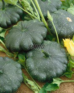 2719-semo-zelenina-patizon-greendisc2