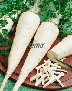 3004-semo-zelenina-petrzel-zahradni-korenova-atika2