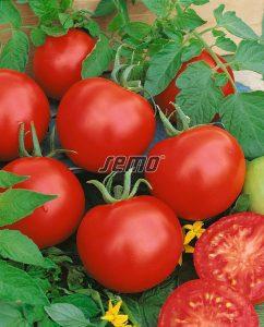 3106-semo-zelenina-rajce-kerickove-karla2