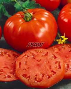 3108-semo-zelenina-rajce-kerickove-pavlina2