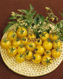 3119-semo-zelenina-rajce-kerickove-minigold2