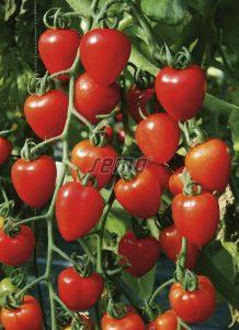 3268-semo-zelenina-rajce-tyckove-gardenberry-2