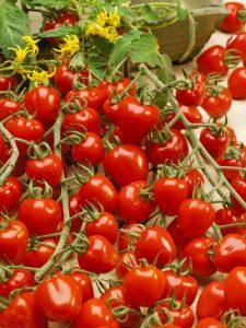3279-semo-zelenina-rajce-tyckove-jahodo-2-2