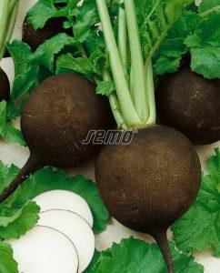 3303-semo-zelenina-redkev-seta-panter2
