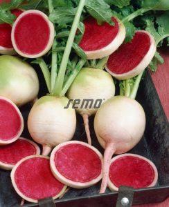 3331-semo-zelenina-redkev-seta-red-meat2