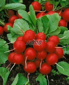 3402-semo-zelenina-redkvicka-granat2