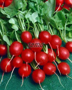 3412-semo-zelenina-redkvicka-prima2