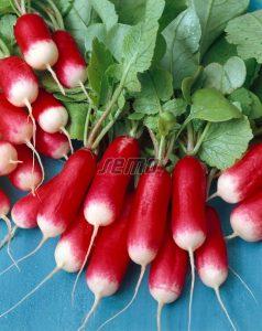 3413-semo-zelenina-redkvicka-slavia2