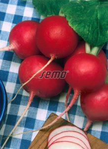 3421-semo-zelenina-redkvicka-tercia2