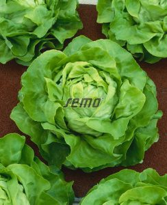 3802-semo-zelenina-salat-hlavkovy-deon2