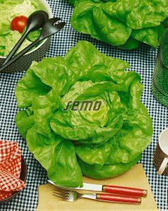 3803-semo-zelenina-salat-hlavkovy-faraon2