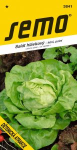 3841_salát-hlávkový-DĚTENICKÁ-ATRAKCE-2