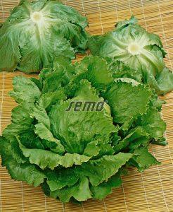 3851-semo-zelenina-salat-hlavkovy-prazan2-2
