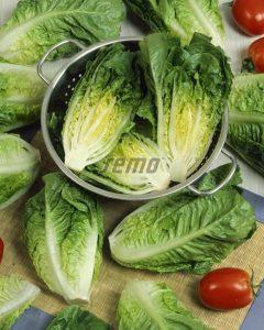 3894-semo-zelenina-salat-rimsky-little-gem-2