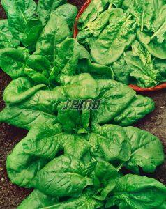 3912-semo-zelenina-spenat-sety-clarinet2-2