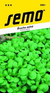 3981_šrucha-GREEN-PURSLANE-2