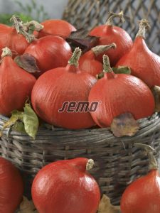 4076-semo-zelenina-tykev-velkoploda-solor2