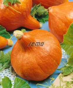 4077-semo-zelenina-tykev-velkoploda-delician2