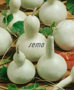 4092-semo-zelenina-kalabasa-birdhouse-bottle2