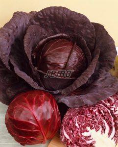 4301-semo-zelenina-zeli-hlavkove-mars2