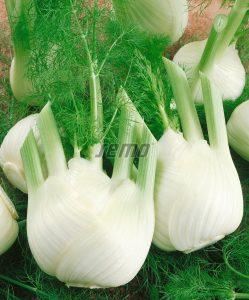 4501-semo-zelenina-fenykl-obecny-de-florencia2