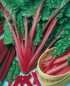 4907-semo-zelenina-mangold-rhubar-charb2