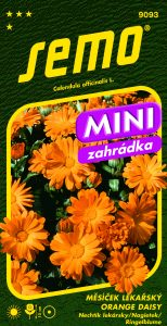 9093_měsíček-lékařský-ORANGE-DAISY_MINI-2