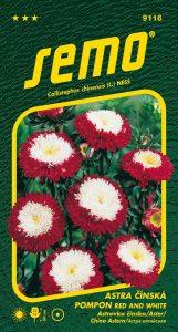 9116_astra-čínská-POMPON-RED-AND-WHITE-2